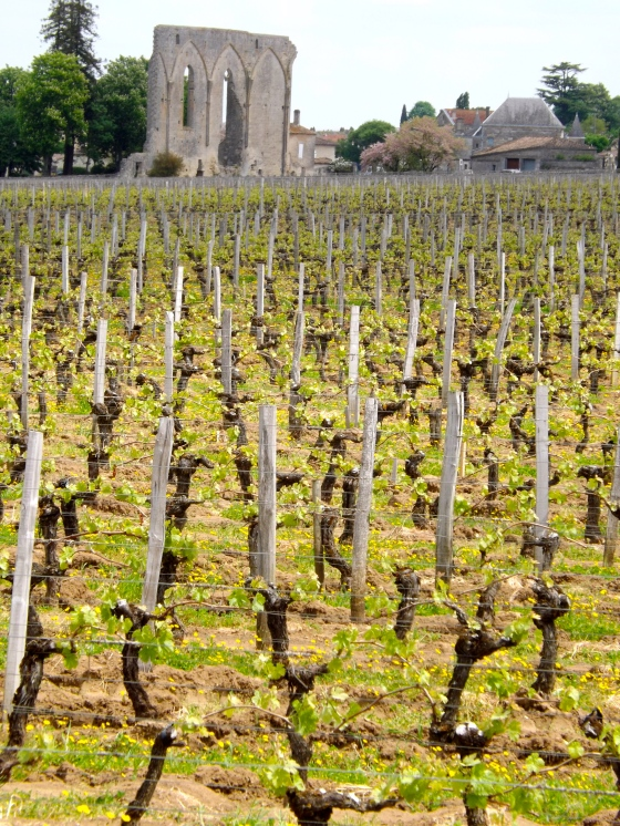Vineyard in St. Emilion