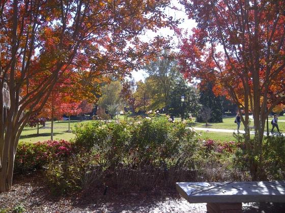 A 2012 fall N.C. day